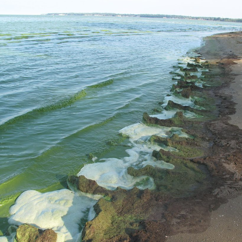 lake-erie-algal-bloom